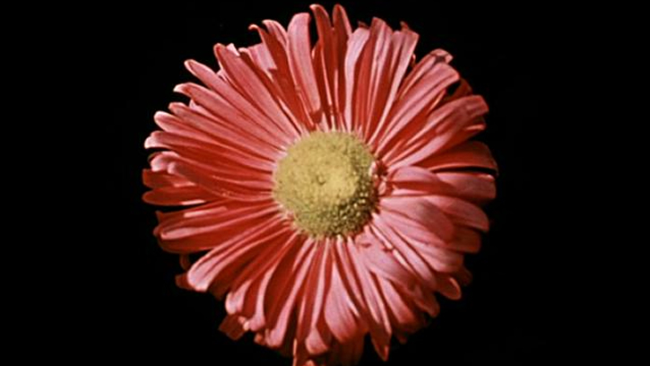 Le Chant de la fleur introuvable