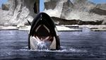 Orca (Michael Anderson )