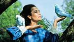 L Oiseau Bleu George Cukor