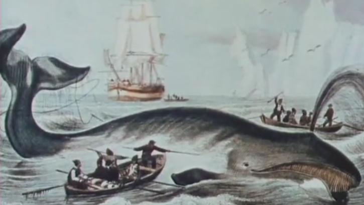 Vive la baleine