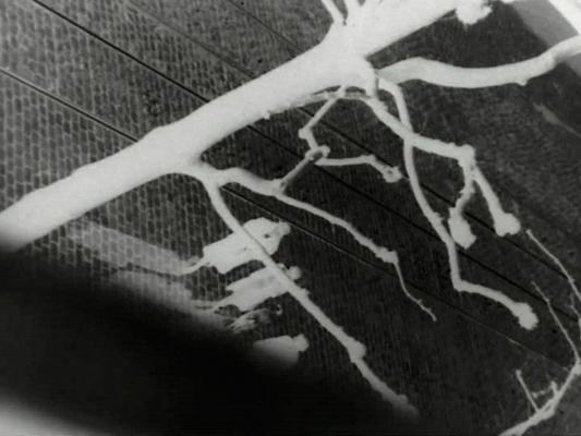 Jeux arborescents - Emile Malespine - 1931- Collections La Cinémathèque française
